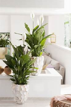 10 zimmerpflanzen die wenig licht brauchen wohnzimmer