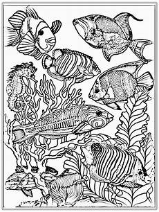 adult free fish coloring pages realistic coloring pages ocean coloring pages fish coloring
