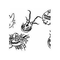 Malvorlagen Dragons Indo Astrid Pet Nadder In How To Your