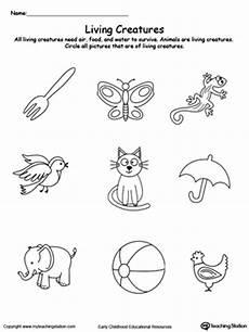 animals living things worksheets 14056 kindergarten plants and animals printable worksheets myteachingstation