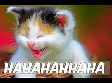 Kucing Lucu Imut Menggemaskan