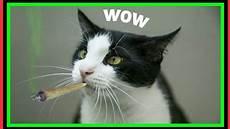 Lustige Ausmalbilder Katzen Lustige Katzen Zum Totlachen Cat Fails