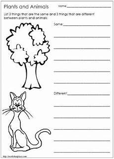 plant and animal needs lataya science classroom kindergarten science kindergarten lessons