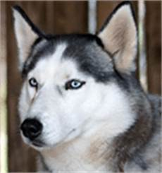 hund steckbrief tierlexikon