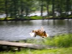 Nichts Wie Weg Foto Bild Fotos Natur See Bilder Auf