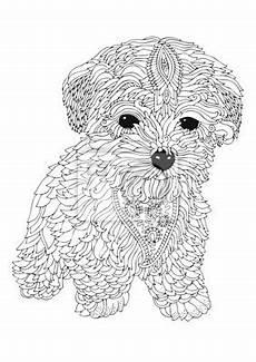 bichon frise welpe gezeichnete hund skizze f 252 r anti