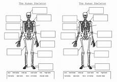 worksheets ks2 parts 18802 the skeleton and muscles powerpoint and worksheets by hilly577 teaching resources tes
