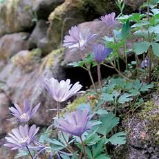 pflanzen shop günstig naturagart shop steingarten zwiebeln kaufen