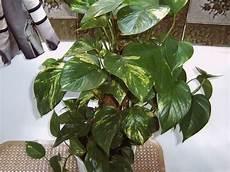 kennt jemand diese pflanze und ist sie f 252 r katzen giftig