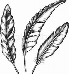 feder schwarz weiß vorlage vintage feather set isolated on white background