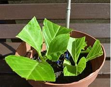 hortensien pflegen und vermehren