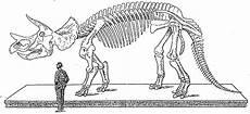 Ausmalbilder Dinosaurier Langhals Die 20 Besten Ideen F 252 R Ausmalbilder Skelett Beste