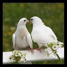 Belajar Dari Burung Merpati Makhluk Tuhan Yang Setia Dan