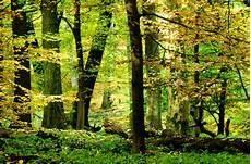 landuse forrest vs wood openstreetmap