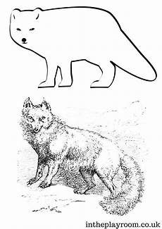 arctic animals printable coloring pages 17219 arctic animals colouring pages in the playroom