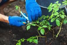 Vermehren Tipps Zur Vermehrung Mit Samen