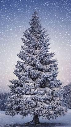iphone wallpaper winter trees fir trees snowfall winter iphone 5s wallpaper