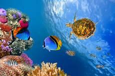 Unterwasser Tiere Malvorlagen Englisch Fototapete Fisch Im Wasser Jetzt Einfach Bestellen