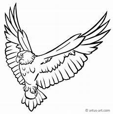 Ausmalbilder Zum Ausdrucken Adler Adler Ausmalbild 187 Gratis Ausdrucken Ausmalen 187 Artus
