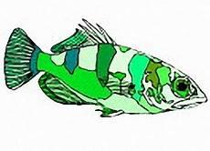 Malvorlage A4 Malvorlage Fisch Din A4