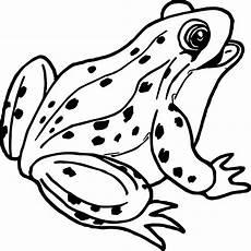 Malvorlagen Frosch Kostenlos Frog Outline Free On Clipartmag