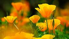 flower wallpaper for pc 4k yellow wallpapers high quality free