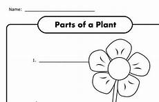 discovering plants worksheets grade 5 13532 parts of a plant worksheet for k free kindergarten worksheets kindergarten science parts of