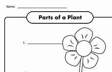 parts of plants kindergarten worksheets 13581 parts of a plant worksheet for k free kindergarten worksheets kindergarten science parts of