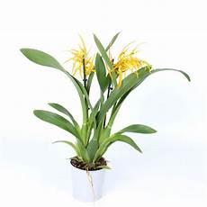 spezielle und separate orchideen florastore