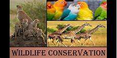 wildlife topics wildlife conservation a necessity