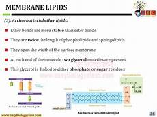 membrane lipids properties structure and classification by easybiol