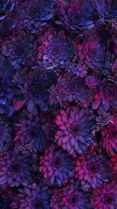 iphone purple flower wallpaper nature wallpaper iphone flowers в 2019 г цветочные фоны