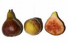 La Cuisine Du Jardin Figue Common Fig