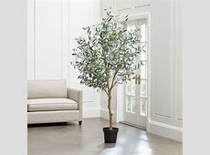 Faux Olive Tree   Reviews   Crate and Barrel