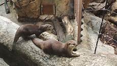 Gambar Margasatwa Kebun Binatang Binatang Menyusui