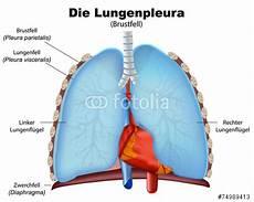 rippenfellentzündung schmerzen beim liegen quot lungenpleura pleura der lunge vektor illustration