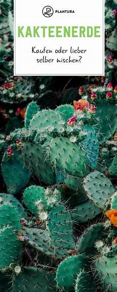 kakteenerde kaufen selber mischen garten kaktus und