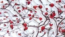 how to survive winter edibles survivopedia