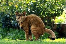 Was Tun Gegen Katzen Im Garten - katzenkot im garten was tun zuhause net