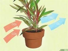 Pflanzen Die Die Luft Reinigen Die Luft Mit Hilfe Pflanzen Reinigen Wikihow