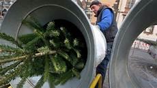 tipps so bleibt die fassade lange tipps vom experten so bleibt der weihnachtsbaum lange