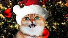 10 completely miserable christmas cats the frisky