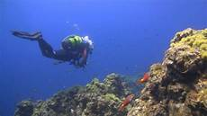 diving in the azores santa maria ǀ underwater adventure youtube