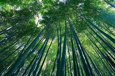 9 Gambar Pemandangan Hutan Yang Indah Gambar Pemandangan