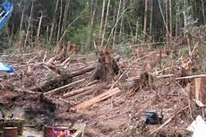 Hutan Batang Toru Rumah Orangutan Yang Terancam Tambang