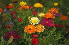 Blumen Malvorlagen Kostenlos Xyz Blick In Eine Blumenwiese 3 Piqs De Bilddatenbank