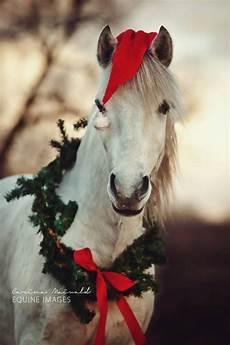 season s greetings horsin around horses