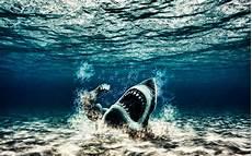 underwater black and white iphone wallpaper underwater wallpaper iphone mobiles shark 2884 wallpaper