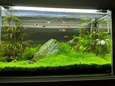 ada aquascape ada 60p iwagumi aquascape plantedtank