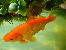 Common Aquarium Or Fish Farm Diseases Treatments